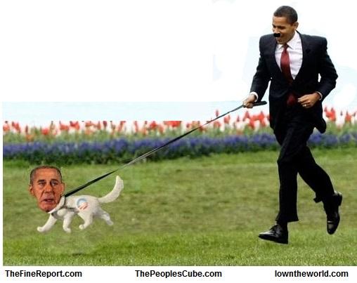 Boehner dog
