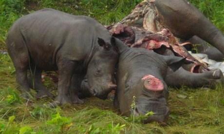 rhino-slaughter